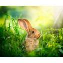 پوستردیواری سه بعدی طرح خرگوش در مزرعه کد Nm.062