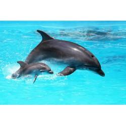 پوستردیواری طرح دلفین مادر مهربان کد F002
