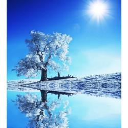 پوستردیواری طرح تک درخت برفی کد NT.072