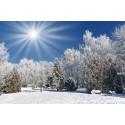 پوستردیواری طرح خورشیده بر فراز جنگل یخ زده کد NT.060