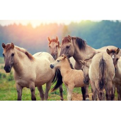 پوستردیواری سه بعدی طرح اسب های آرام کد Nm.012