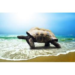 پوستردیواری سه بعدی طرح لاکپشت در ساحل کد Nm.038