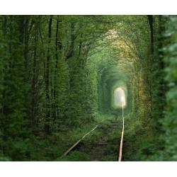 پوستر دیواری طرح جنگل کد 3D.151