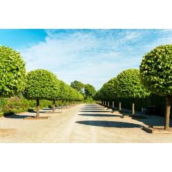 پوستردیواری طرح درختان سبز کد Nu.003