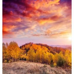 پوستردیواری طرح درختان پاییزی کد Nu.039