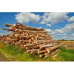 پوستردیواری طرح تنه بریدهشده درختان کد Nu.050