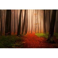 پوستردیواری طرح غروب جنگل کد Nu.019
