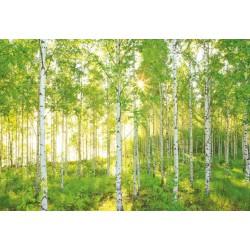 پوستر دیواری طرح درختهای انبوه